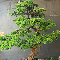LD062-广场植物绿雕哪家好