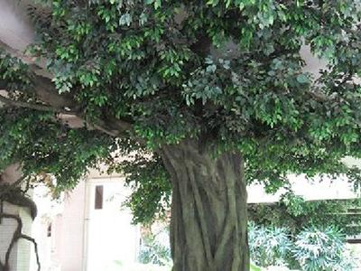 LD126-广场植物绿雕哪家好