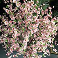 LD188-广场植物绿雕价格