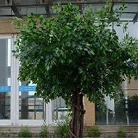 LD189-广场植物绿雕制作