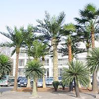 LD430-广场植物绿雕哪家好