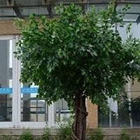LD431-广场植物绿雕哪里有