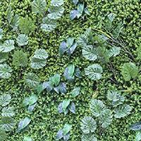 LD433-广场植物绿雕制作厂家