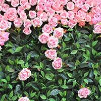 LD434-广场植物绿雕生产厂家