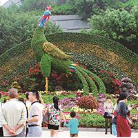 LD629-广场植物绿雕加工