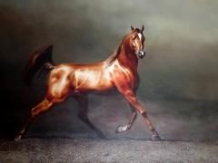 田跃民《吉尔吉斯油画—马1》60cm×80cm(2万元/幅
